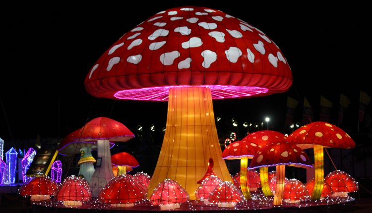 PHOTO: Giant mushrooms as part of the Mystical Forest display. Photo by The Signal reporter Bianca Salazar.