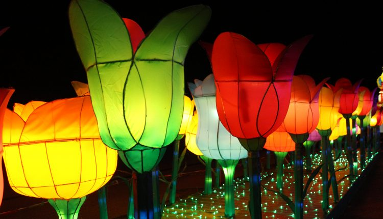 PHOTO: A display of lit tulips on display for the Mystical Forest attraction. Photo by The Signal reporter Bianca Salazar.