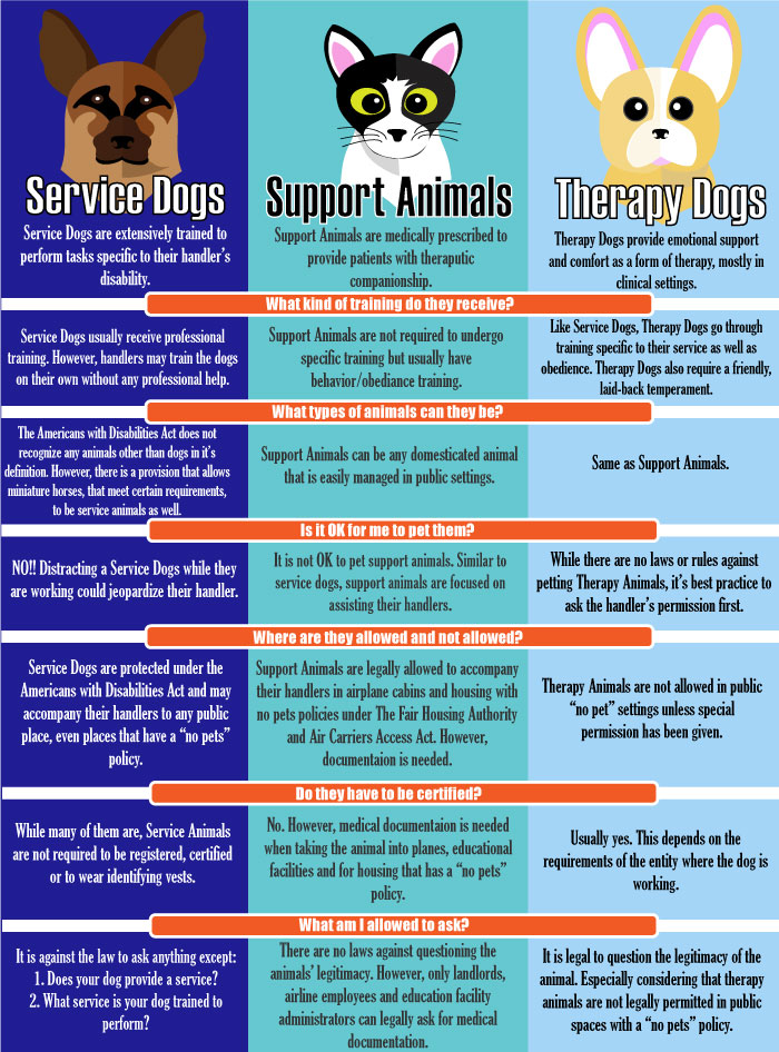 Service Dog Vs Therapy Dog